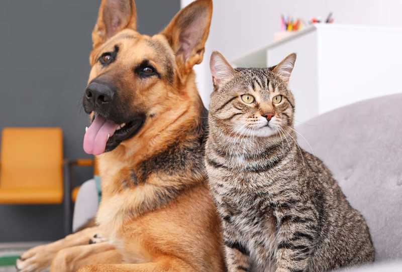 are dogs better than cats?